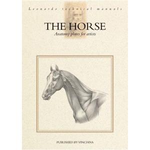 Anatomia Calului